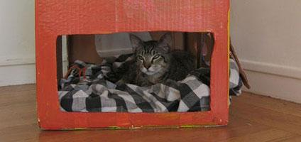 10 Homemade Cat Forts