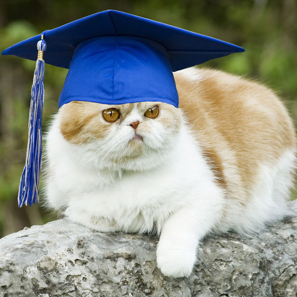 Ask Einstein Why Did My Owner Dump Me After She Graduated