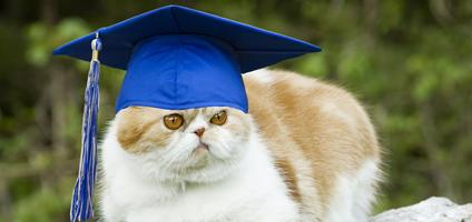 6 College Degrees For Cats Catster