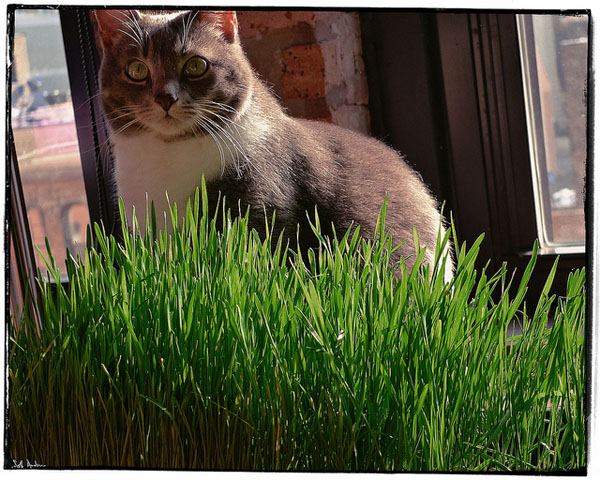 5 Plants to Add to Your Cat-Friendly Garden - Catster