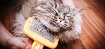 5 Ways to Brush a Cat and Make Him Love It - Catster