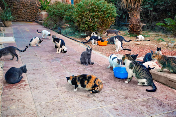 Today Is Cat Herders Day Go Do Something Impossible