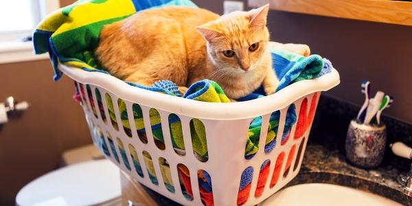 cat-laundry-shutterstock_146892332_0.jpg