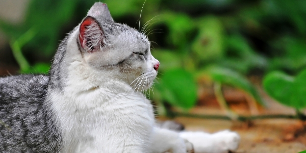 Namaste, Kitty! 5 Yoga Lessons From My Cats
