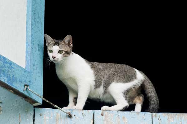 Can A Cat Survive Internal Bleeding
