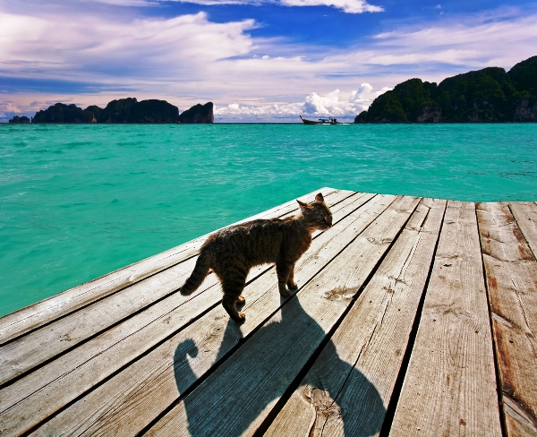 A cat on a pier.