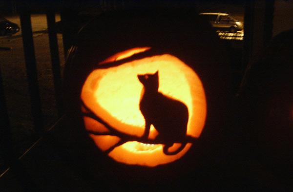 21 Incredible Cat Pumpkin Carvings Catster