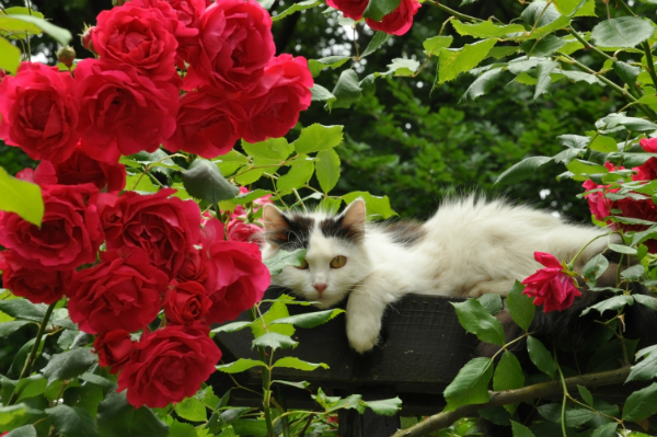 5 Plants To Add To Your Cat Friendly Garden Catster
