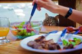 A cat sitting at a table hoping to eat salad.
