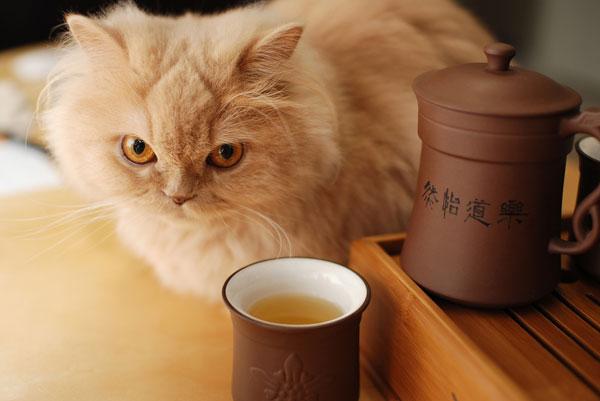 5 Ways To Improve Cat Litter Longevity During Winter Catster