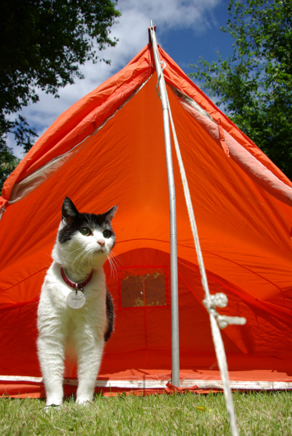 Would You Ever Go Camping With Your Cat?