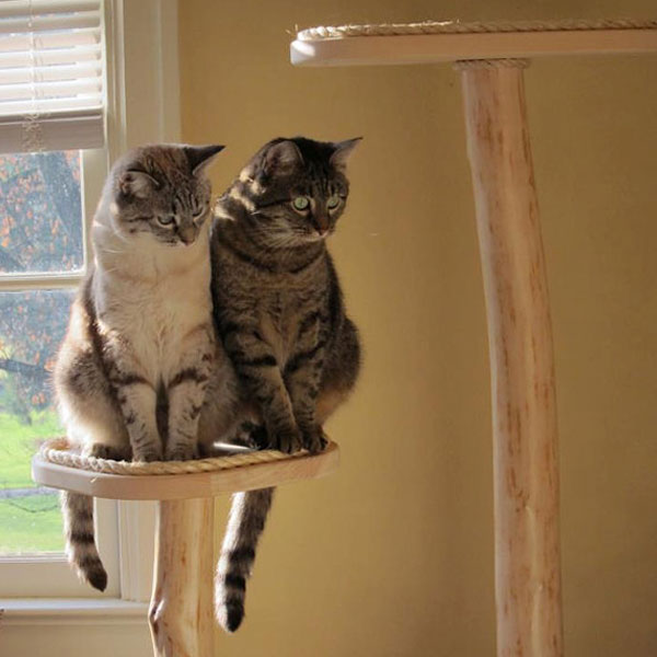 Reccommended Scratching Posts For Cats