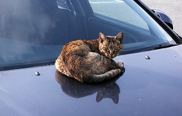 Are You Putting Your Cat in Your Will? - Catster