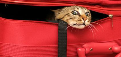 Why You Can T Take Your Cat On Vacation Catster