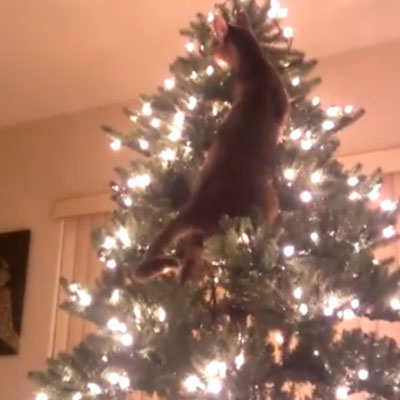 Cats Vs Christmas Trees.It S An Epic Battle Of Cat Vs Christmas Tree Catster