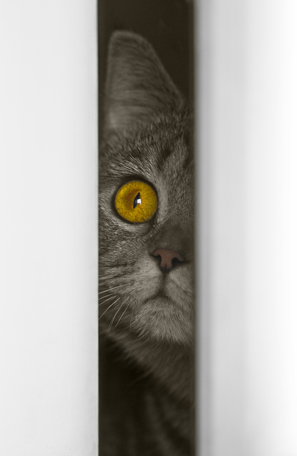 A cat with yellow eyes looking through a crack in a door.