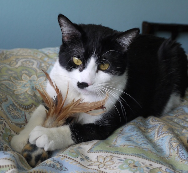When It Isn\u0027t a Hairball How I Learned My Cat Has Asthma