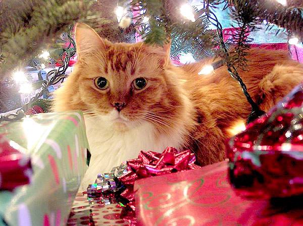 Ask a Vet: The Top 7 Holiday Health Hazards for Cats - Catster