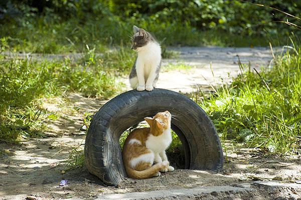 Resultado de imagen para cat park