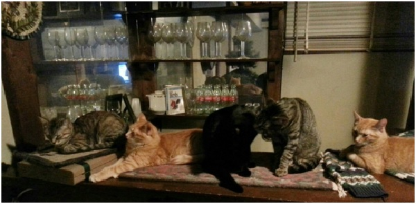 Cats at the Bar: Meet the 18 Feline Stars of this Family Blog