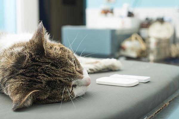 cats-breathing-tube-ed-cat-vet-01.jpg