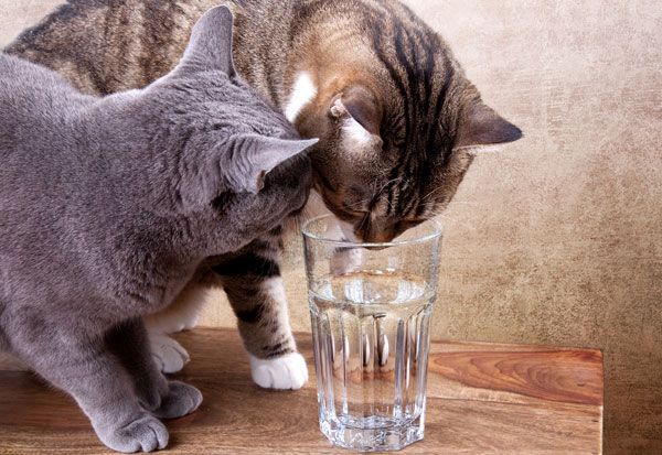 cats-drink-water.jpg