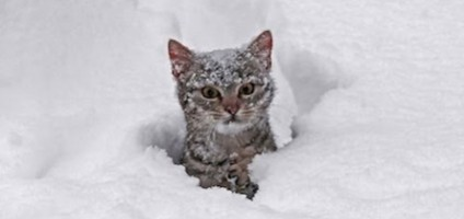 Videos We Love: Cats Exploring Snow for the First Time