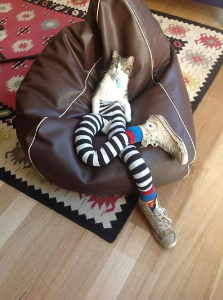 10 Pictures of Cats Wearing Tights — It's a Real Trend ...