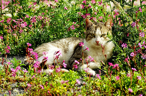 Take it from a vet lilies are toxic to cats catster cats usually eat the leaves but the flowers are also poisonous a cat who walks through lily pollen and then grooms his paws is at mightylinksfo