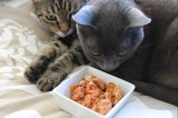 CatConLA: A New School Event for Cat Lovers Hits Los Angeles in 2015