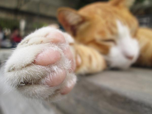 cats-paws-facts-IMAGE