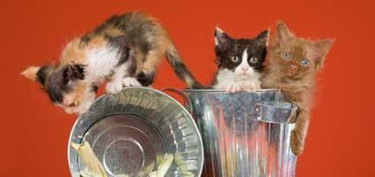 11 Tips for Cat-Proofi...
