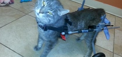 Emerson Is a Disabled Cat Who's Loving Despite a History of Abuse
