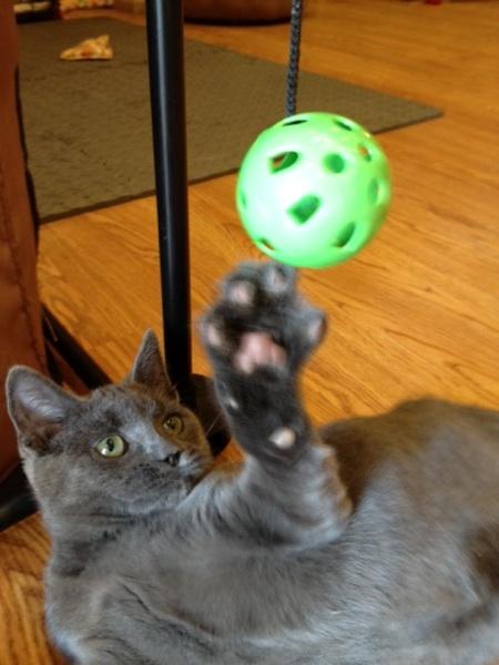 Meet D'Artagnan, a Paraplegic Kitty Living Life to the Fullest - Catster
