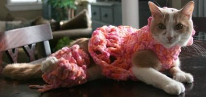 Crocheted Leggings Help Willow The Deformed Kitty Walk