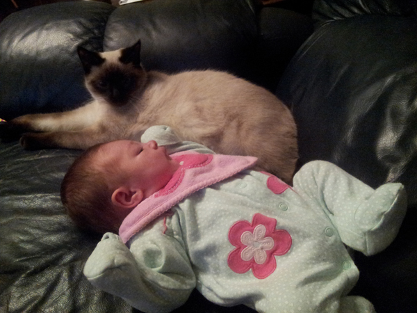 We Debunk 4 Myths About Cats and Babies