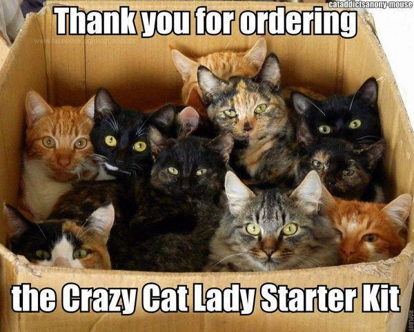 I Love Cats and I Love Humor, But #ImNOTaCrazyCatLady