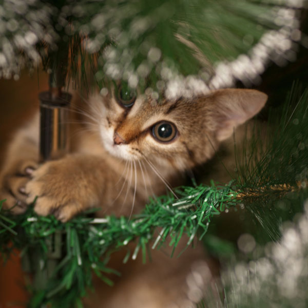 6 Christmas Safety Tips For Cat Owners