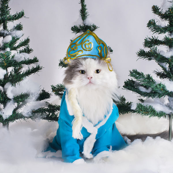 Cats do not take to little clothes or costumes with the same ease as dogs. Simplicity and freedom of movement are key to selecting a costume that your cat ... & 6 Christmas Safety Tips for Cat Owners - Catster