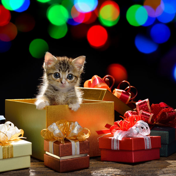 Are Christmas Trees Bad For Cats: 6 Christmas Safety Tips For Cat Owners