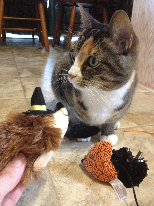 Boo! We Review PetSmart's 2013 Halloween Costumes and Toys