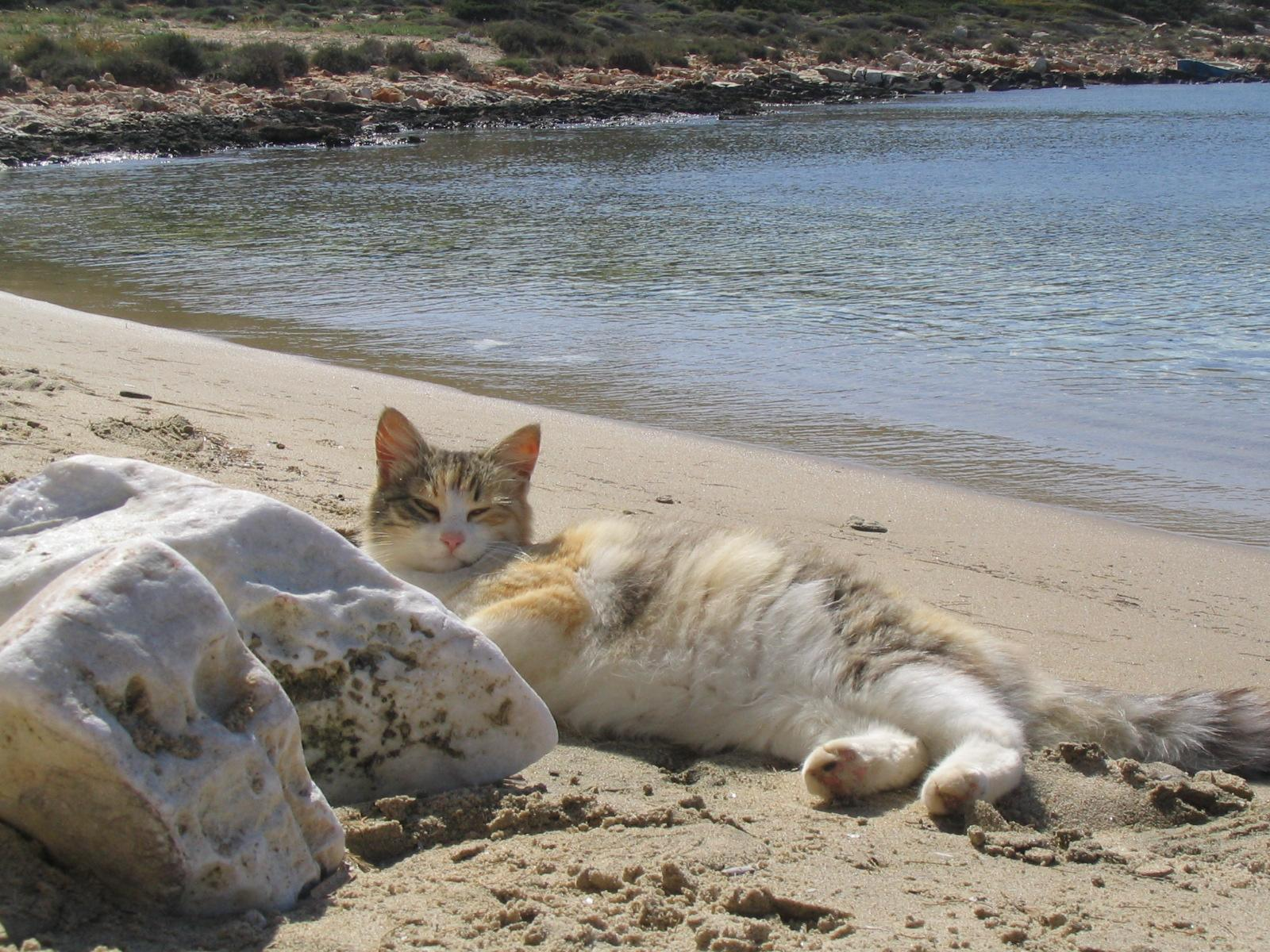 Thursday Thir Cats On The Beach Catster