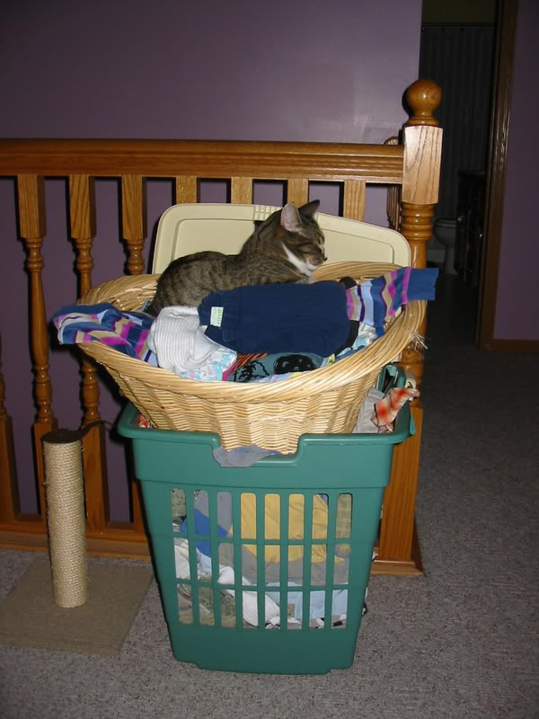 6 reasons why laundry baskets are perpetual cat magnets catster