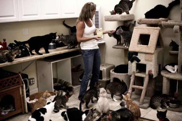 Cat woman dating