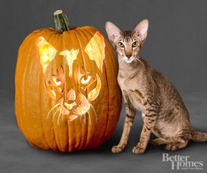 Thursday Thirteen: 13 Cat Breed Jack-o-Lantern Stencils ...Jack O Lantern Patterns Cat