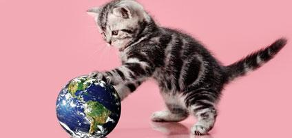 What Do You Know About Eco Friendly Cat Options Take Our