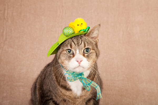 A cat in an Easter hat.