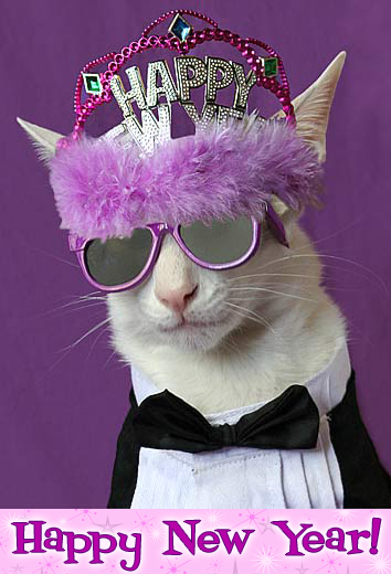 Happy New Year cat wearing a new year tiara