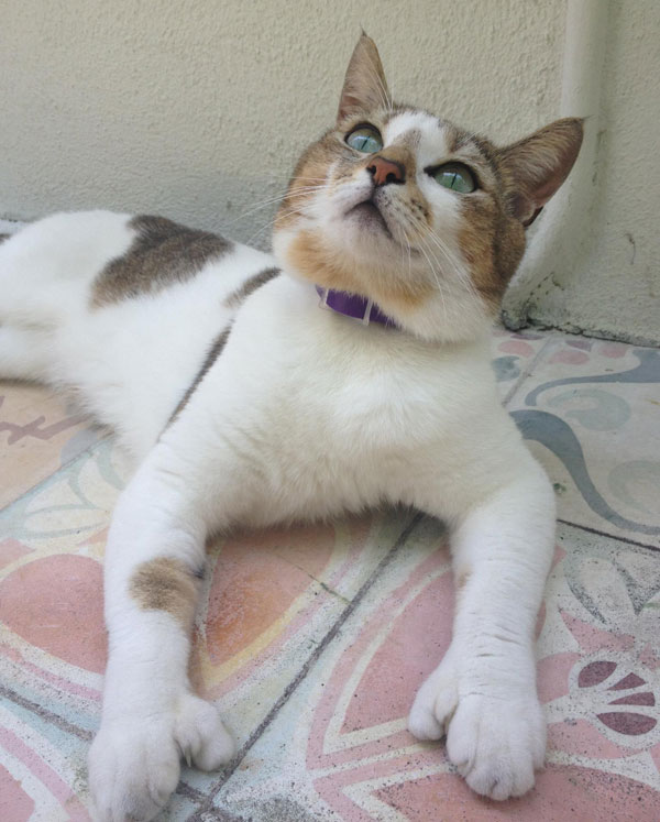 We Visit Hemingway House and Its Six-Toed Cats - Catster  We Visit Heming...