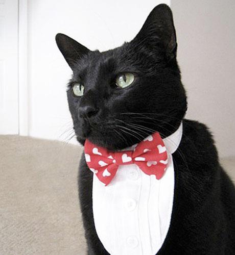 Cat Chic 10 Furrocious Feline Fashion Designers & Cat Chic: 10 Furrocious Feline Fashion Designers - Catster